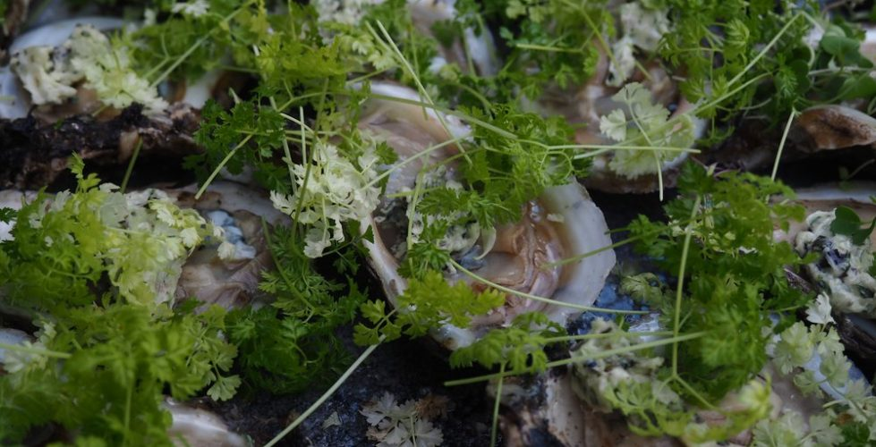 oyster-microgreens-littlegreenapron